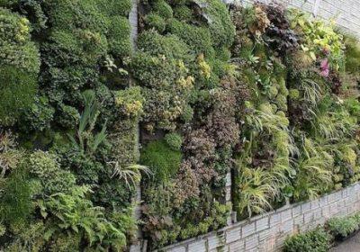 Papel de las plantas en las viviendas bioclimáticas